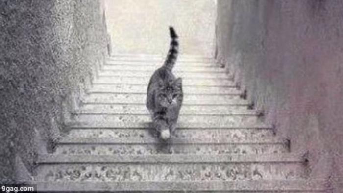 foto kucing naik turun tangga