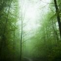 Hutan pohon
