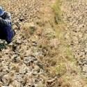 Dampak El Nino, kering di mana-mana (komodonews)