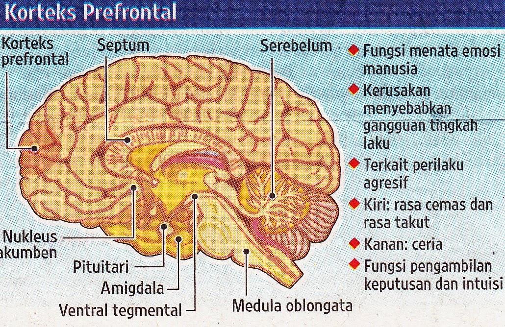 Kerusakan otak akibat pornografi