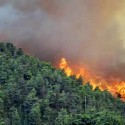 Musibah asap dari kebakaran hutan (rol)