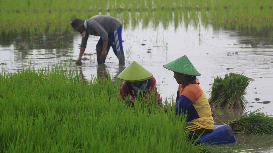 Terlalu Fokus Ke Pertanian Pemkab Indramayu Diniai Telat