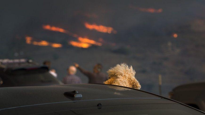 Kabakaran hutan di California. (Foto: Getty Images/BBC News)