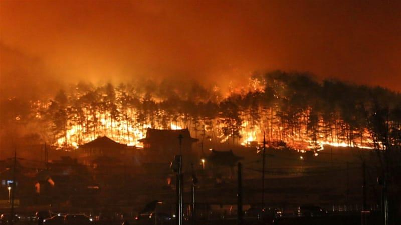Sebanyak 872 truk pemadam kebakaran dan 3.251 petugas pemadam kebakaran dari seluruh negara bekerja mengatasi kebakaran di Korea Selatan.(Foto: Reuters/Al Jazeera)