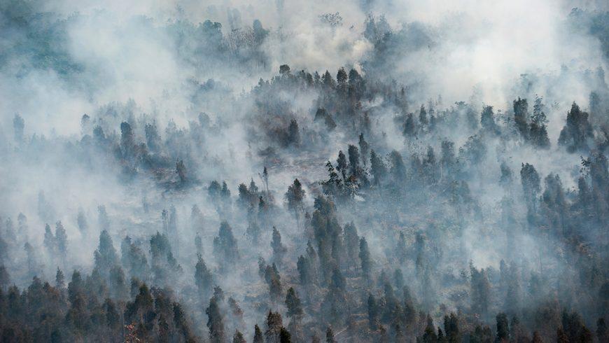 Pihak berwenang Indonesia mengatakan ratusan sekolah di provinsi Riau yang terdampah asap parah di Sumatra harus diliburkan, tanpa memberikan angka yang pasti. Sementara sekitar 1.300 ditutup di provinsi Kalimantan Tengah di Kalimantan. (Foto: AP/Al Jazeera)
