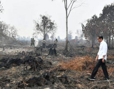 Presiden Indonesia Joko Widodo berjalan di hutan yang terbakar ketika petugas pemadam kebakaran memadamkan api yang tersisa di Riau, Indonesia. (Foto: Sekretariat Presiden Indonesia melalui AP/Al Jazeera)