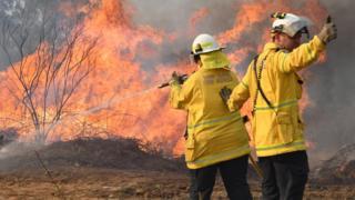 Petugas pemadam kebakaran berupaya memadamkan api di dekat kota Drake di New South Wales.(Foto: EPA/BBC News)